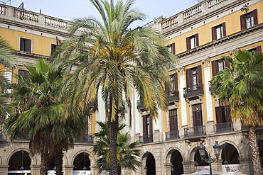 Spain, Catalonia, Barcelona, Palm trees in Placa Reial.