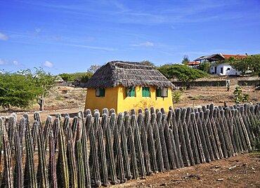 Dutch Antilles, Bonaire, Kradlendijk, Typical house with cactus fence.