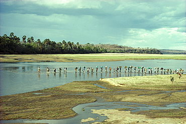 Tanzania, Selous Park, three men on Safari crossing river with their many guides and porters