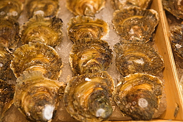 Spain, Madrid, Oysters on display at the Mercado de San Miguel.