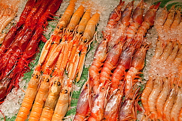 Spain, Madrid, Display of langoustines on a stall in the Mercado San Anton.