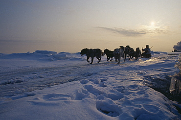 RUSSIA Siberia Tchukotka Nalrus and seal Innuit eskimo hunt.  Husky drawn sleigh in part silhouette against skyline of snow covered landscape.