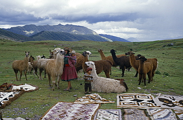 PERU  Cusco Woman and children with llamas and Indian textiles spread out on grass in foreground.  Cuzco