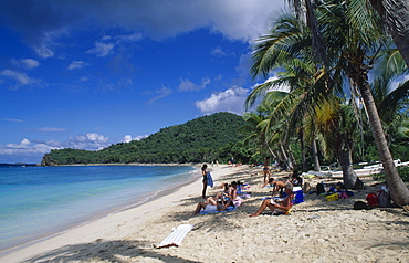 BRITISH VIRGIN IS  Tortola Occupied sandy beach with overhanging palm trees