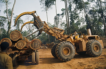 IVORY COAST Industry Logging Timber induLoading felled timber in cleared area of forest. C™te d Ivoire  deforestation