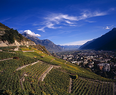 SWITZERLAND Valais Martigny Elevated view east along Rhone Valley above Vinyards and Town of Martigny. European Schweiz Suisse Svizzera Swiss Western Europe Wallis Polynesia Scenic Valais Many Islands Pacific Islands Polynesian Farming Agraian Agricultural Growing Husbandry  Land Producing Raising