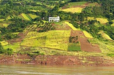 Rich farmland on the banks of the Yangtze River near the Qutang Gorge, Yangtze, Chongqing, China