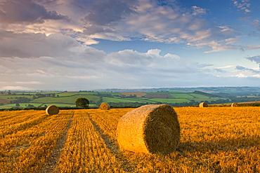 Hay bales in a field near Easington, mid-Devon, Devon, England, United Kingdom, Europe