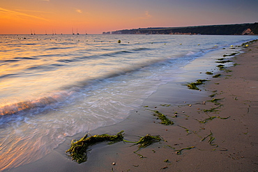 Seaweed washed up on Studland Bay shore at dawn, with Old Harry Rocks in the distance, Studland, Dorset, England, United Kingdom, Europe