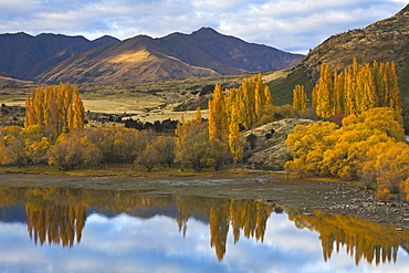 Glorious autumn colour beside the lake at Wanaka, Otago, South Island, New Zealand, Pacific