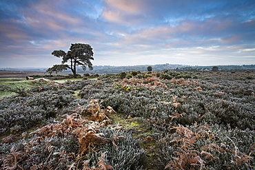 Hoar frost during winter in the New Forest, Hampshire, England, United Kingdom, Europe