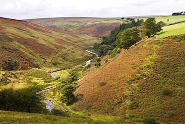 Cornham Brake near Simonsbath, Exmoor National Park, Somerset, England, United Kingdom, Europe