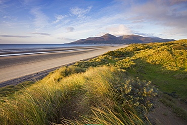 Sand dunes at Murlough alongside Dundrum Bay, with the Mountains of Mourne in the background, County Down, Northern Ireland, United Kingdom, Europe