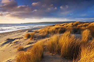 Windswept sand dunes on the beach at Studland Bay, with views towards Old Harry Rocks, Jurassic Coast, UNESCO World Heritage Site, Dorset, England, United Kingdom, Europe