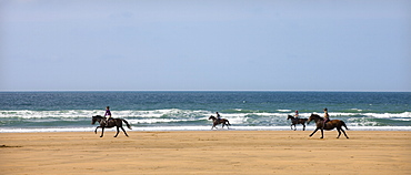 Horse riders galloping down sandy Cornish beach on a summer's day, Sandymouth, Cornwall, England, United Kingdom, Europe