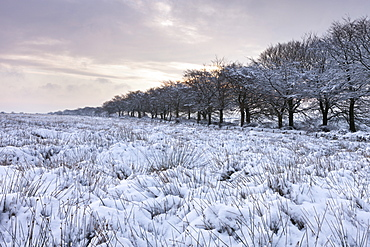 Snow covered field in winter time, Exmoor National Park, Somerset, England, United Kingdom, Europe