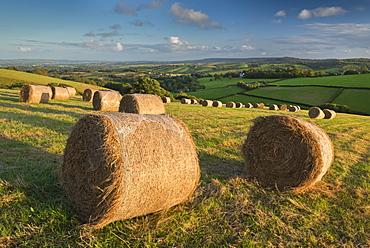 Hay Bales in the rolling fields of Mid Devon in autumn, Devon, England, United Kingdom, Europe