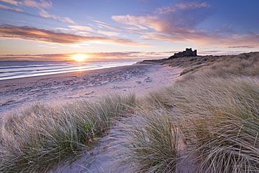 Sunrise over Bamburgh Beach and Castle from the sand dunes, Northumberland, England, United Kingdom, Europe