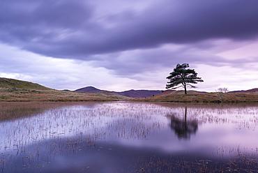 Kelly Hall Tarn at twilight, Lake District, Cumbria, England, United Kingdom, Europe