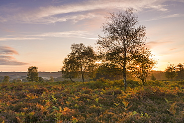 Sunrise over the heathland of the New Forest National Park, Hampshire, England, United Kingdom, Europe
