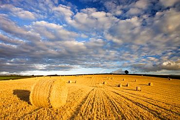 Round hay bales in a field near Morchard Bishop, Devon, England, United Kingdom, Europe