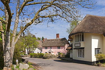 The Royal Oak Inn in the village of Winsford, Exmoor National Park, Somerset, England, United Kingdom, Europe