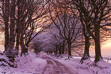 Snowy tree lined country lane at sunrise in winter, Exmoor National Park, Somerset, England, United Kingdom, Europe