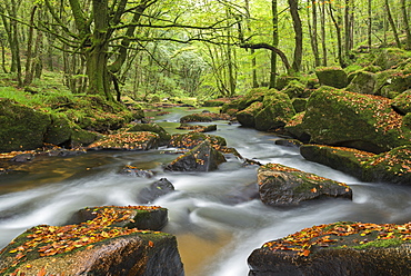 The River Fowey at Golitha Falls on Bodmin Moor, Cornwall, England, United Kingdom, Europe