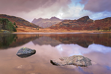 The Langdale Pikes mountains reflected in Blea Tarn in autumn, Lake District National Park, Cumbria, England, United Kingdom, Europe
