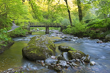 Wooden bridge over the East Lyn River at Watersmeet in spring, Exmoor National Park, Devon, England, United Kingdom, Europe