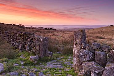 Dry stone wall and open gateway through moorland at sunrise, Dartmoor, Devon, England, United Kingdom, Europe