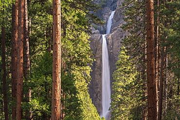 Lower Yosemite Falls through the conifer trees of Yosemite Valley, UNESCO World Heritage Site, California, United States of America, North America