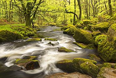 The River Fowey flowing through Golitha Falls, Bodmin Moor, Cornwall, England, United Kingdom, Europe
