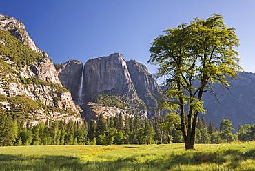 Cooks Meadow and Yosemite Falls, Yosemite Valley, UNESCO World Heritage Site, California, United States of America, North America