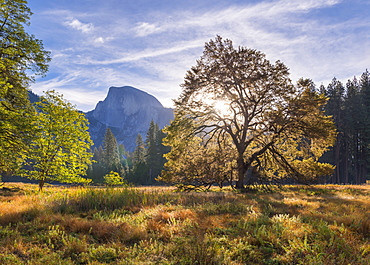 Half Dome from Cook's Meadow, Yosemite Valley, UNESCO World Heritage Site, California, United States of America, North America