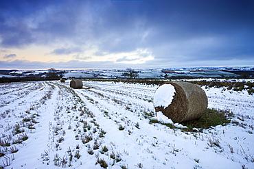 Hay bales in a snow bound field near Morchard Bishop, Devon, England, United Kingdom, Europe
