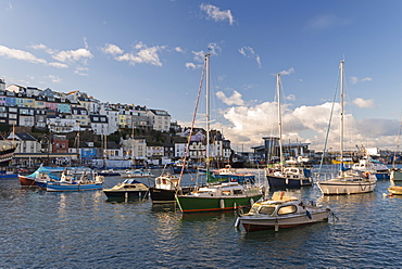 Boats on a sunny afternoon in Brixham harbour, Devon, England, United Kingdom, Europe