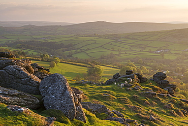 Curious lambs gather on Tunhill Rocks in Dartmoor National Park, Devon, England, United Kingdom, Europe
