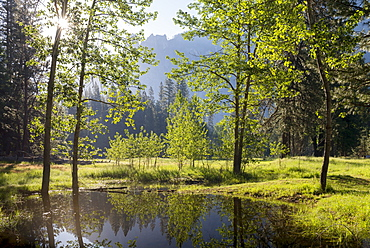 Early morning sunshine shines through spring trees, Yosemite Valley, California, United States of America, North America