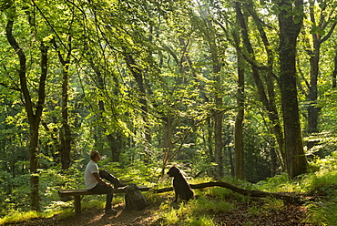 Man resting on a bench with dog in a verdant deciduous woodland in summertime, Dartmoor, Devon, England, United Kingdom, Europe