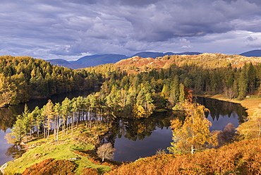 Gorgeous evening sunlight lights up Tarn Hows in the Lake District National Park, Cumbria, England, United Kingdom, Europe