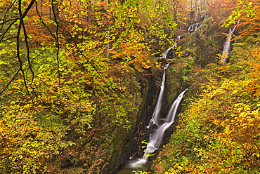 Stock Ghyll Force waterfall cascading down through autumnal deciduous woodland, Ambleside, Lake District, Cumbria, England, United Kingdom, Europe