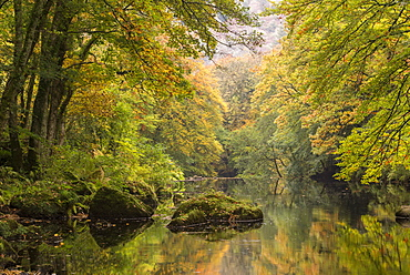Autumnal trees overhanging the River Teign in Dartmoor, Devon, England, United Kingdom, Europe