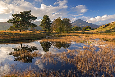 Kelly Hall Tarn and the Coniston Old Man, Lake District National Park, Cumbria, England, United Kingdom, Europe