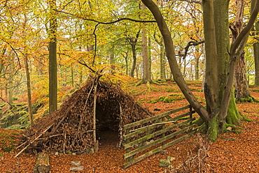 Natural forest shelter in autumnal woodland, Lake District National Park, Cumbria, England, United Kingdom, Europe