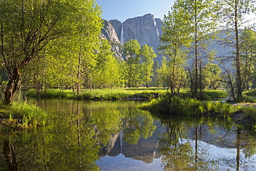 Spring foliage by Yosemite Falls reflected in the River Merced, Yosemite Valley, California, United States of America, North America