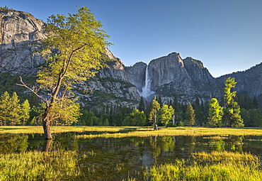 Yosemite Falls beyond a flooded meadow in Yosemite Valley, Yosemite National Park, UNESCO World Heritage Site, California, United States of America, North America