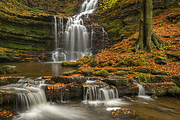 Scaleber Force waterfall in autumn, Yorkshire Dales National Park, Yorkshire, England, United Kingdom, Europe