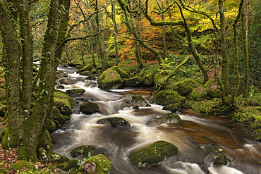Fast flowing woodland stream, Dartmoor National Park, Devon, England, United Kingdom, Europe