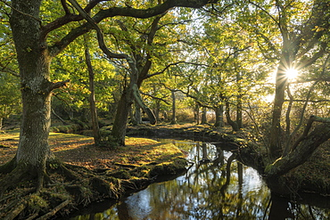 Early morning sunshine penetrates the deciduous woodland surrounding Ober Water near Puttles Bridge in the New Forest National Park, Hampshire, England, United Kingdom, Europe